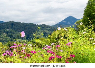 beautiful garden with flowers, mountains in background