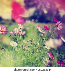 beautiful garden flowers/ summer flower background