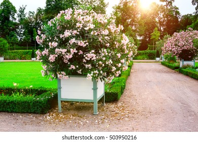 Beautiful garden with green hedges ,with trees, alley, green lawns, bright flower .