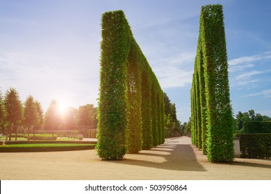 Beautiful garden with green hedges ,with trees, alley, green lawns.