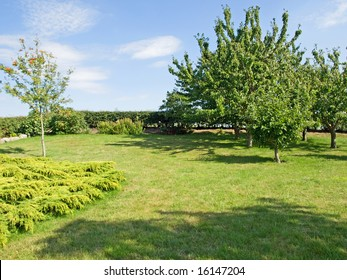 Beautiful garden with green lawn and trees