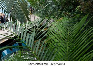 Beautiful garden green trees , botanic , nature,natural ,palms