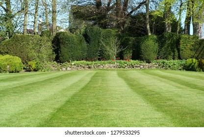 Beautiful Garden Lawn