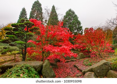 A beautiful garden on autumn season at the park in Germany.