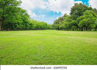 The beautiful garden in the park with green pastures green trees and blue sky.