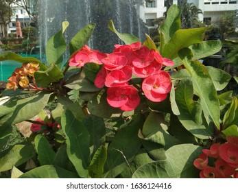 Beautiful Garden and scenerio of flowers - Shutterstock ID 1636124416