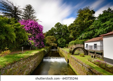Beautiful garden in the town of Furnas in the Azores. The island of São Miguel has many amazing flowers.