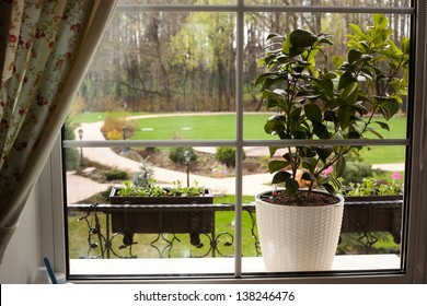 beautiful garden view from the window