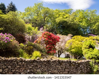 Beautiful gardens in late spring day sunshine at Grasmere, Cumbria, Uk