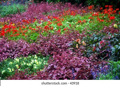 beautiful gardens of many colors
