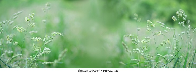 Beautiful gentle green field meadow grass, nature summer landscape, close up. pastoral rural artistic image. summer season. Abstract Meadow Grass Background. banner Wide format, copy space.