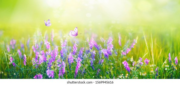 Beautiful gentle spring summer natural background. Butterflies are fluttering over  meadow of wild flowers and young juicy green grass in sunlight on nature, blurred background, soft focus