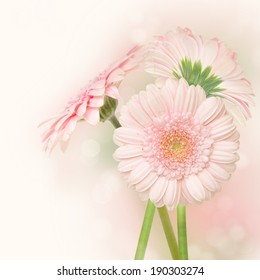 Beautiful gerber bouquet.