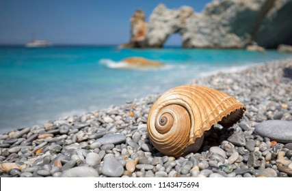 Beautiful giant sea shell on the beautiful Lalaria beach with turquoise sea