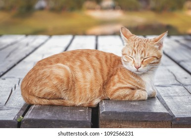 Orange Tabby Cat Images Stock Photos Amp Vectors Shutterstock
