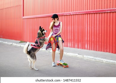 Dog Red Skateboard Images Stock Photos Vectors Shutterstock