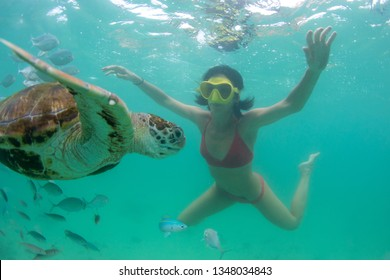 beautiful girl dives with wild turtles in the clear ocean near the island of Mauritius