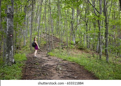 Beautiful girl hiking in nature forest