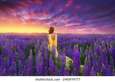 A beautiful girl in a long yellow dress against the background of a blooming purple lupine field and a bright sunset sky.