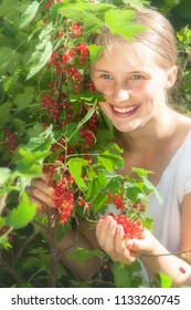 Beautiful girl is picking red currant