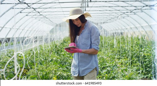 A beautiful girl in a straw hat uses a tablet to study, cares for seedlings, in a greenhouse. Concept: bio products, natural products, fresh and delicious, fruits, vegetables, grow, water, plants.