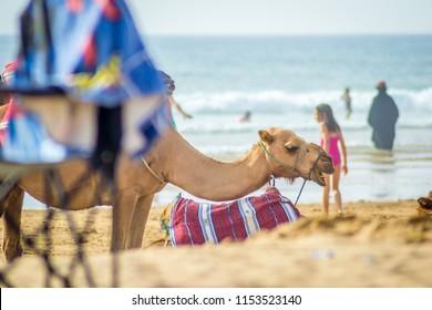 Beautiful girl in Tangier beach in summer behind camel