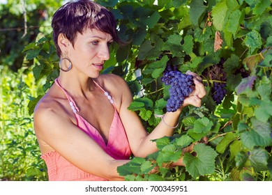 A beautiful girl in a vineyard trying grapes
