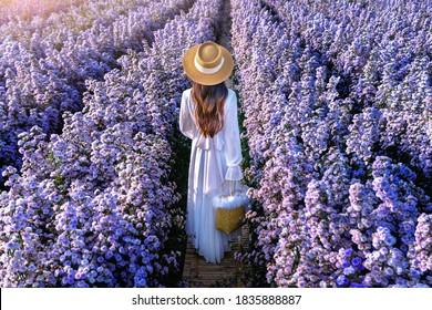 Beautiful girl in white dress walking in Margaret flowers fields, Chiang mai in Thailand.