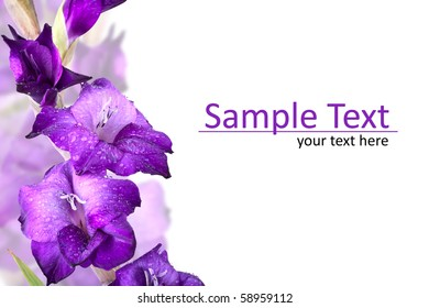 Beautiful Gladiola Flower - Much Space for own text