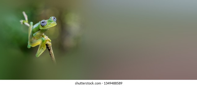Beautiful Glasses frog