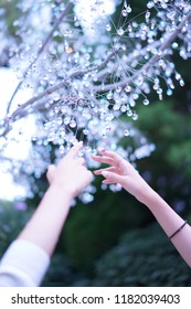 Beautiful glasses tree and hands