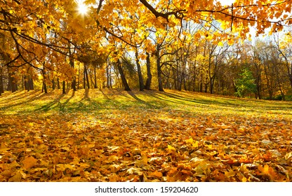 Beautiful golden autumn landscape in the Moscow park