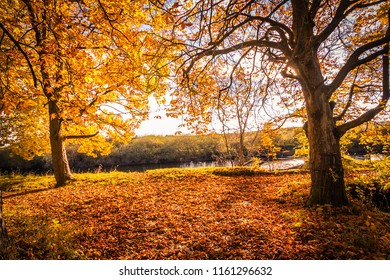 Beautiful, golden autumn scenery with trees and golden leaves in the sunshine at the river, Scotland