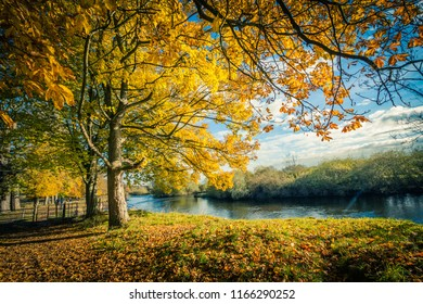 Beautiful, golden autumn scenery with trees, the river and golden leaves in the sunshine, Motherwell in Scotland