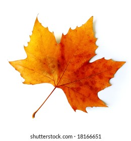 Beautiful golden Fall leaf isolated in white