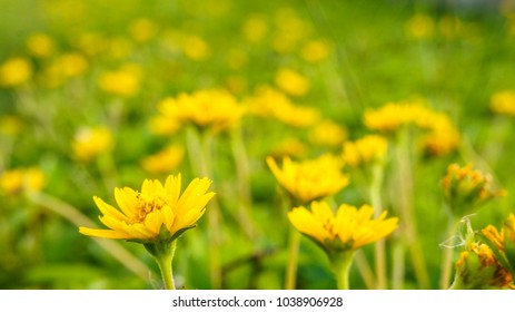 Beautiful golden flower on green grass . Freshness concept.