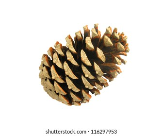 Beautiful golden pine cone isolated on white background