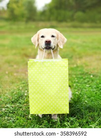 Beautiful Golden Retriever dog holding green shopping bag in teeth on grass in summer park