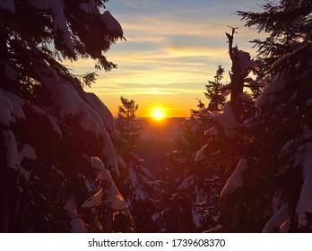 Hermosa puesta de sol dorada entre abetos cubiertos de nieve en las montañas Jeseniky checas.