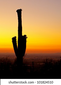 Beautiful golden sunset over the city of Phoenix with a silhouette of a blooming Saguaro cactus in the foreground