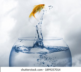 Beautiful goldfish jumping out of water against cloudy sky
