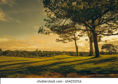 Beautiful golf course view with yellow sunset