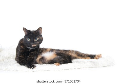 Beautiful graceful cat lying on a soft blanket. Studio photography on a white background.
