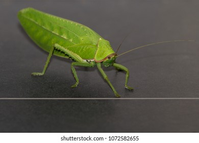 locust images stock photos  vectors  shutterstock