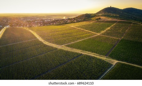 Beautiful grapevine field beneath hill in sunset.Vrsac city. Horizontal image. Landscape.