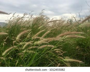 Beautiful grass field under sunny sky
