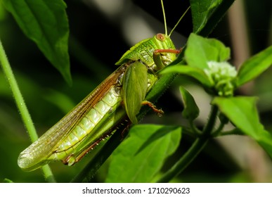 A Beautiful Grasshopper with Details