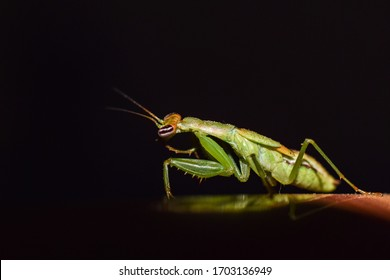 a beautiful grasshopper is searching for his food in the forest