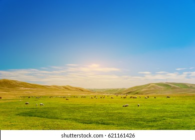 Beautiful grassland, cattle and flock with blue sky and white clouds