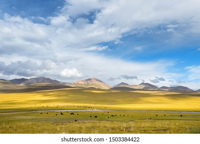 beautiful grassland scenery, gonghe county, qinghai province, China